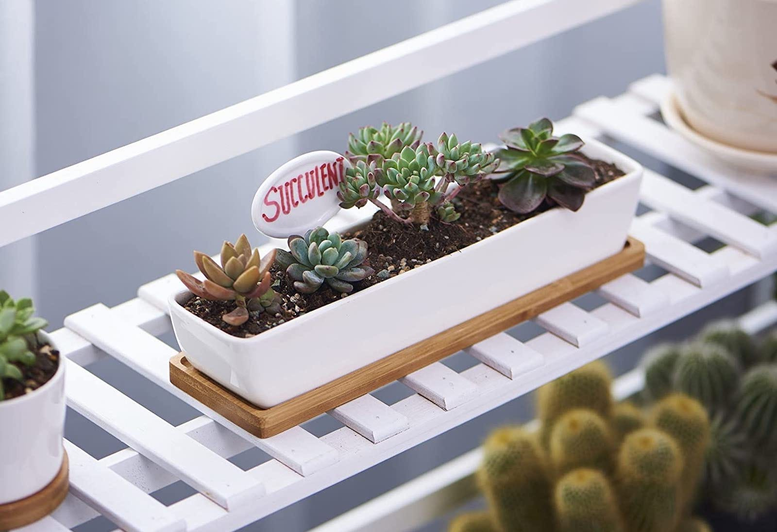 A white ceramic planter filled with succulents, sitting on white wooden slats.