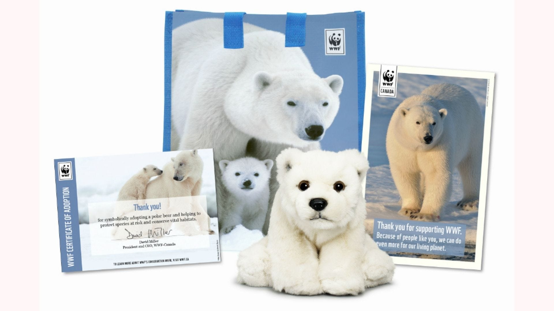 WWF Polar Bear adoption kit.
