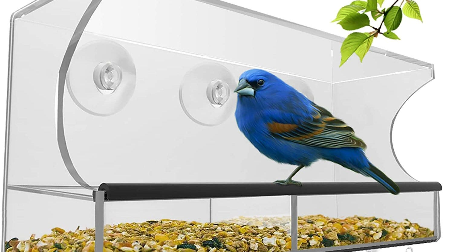 Window bird feeder with a bird on it.