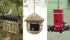 How to Bring All the Birds to Your Yard This Spring