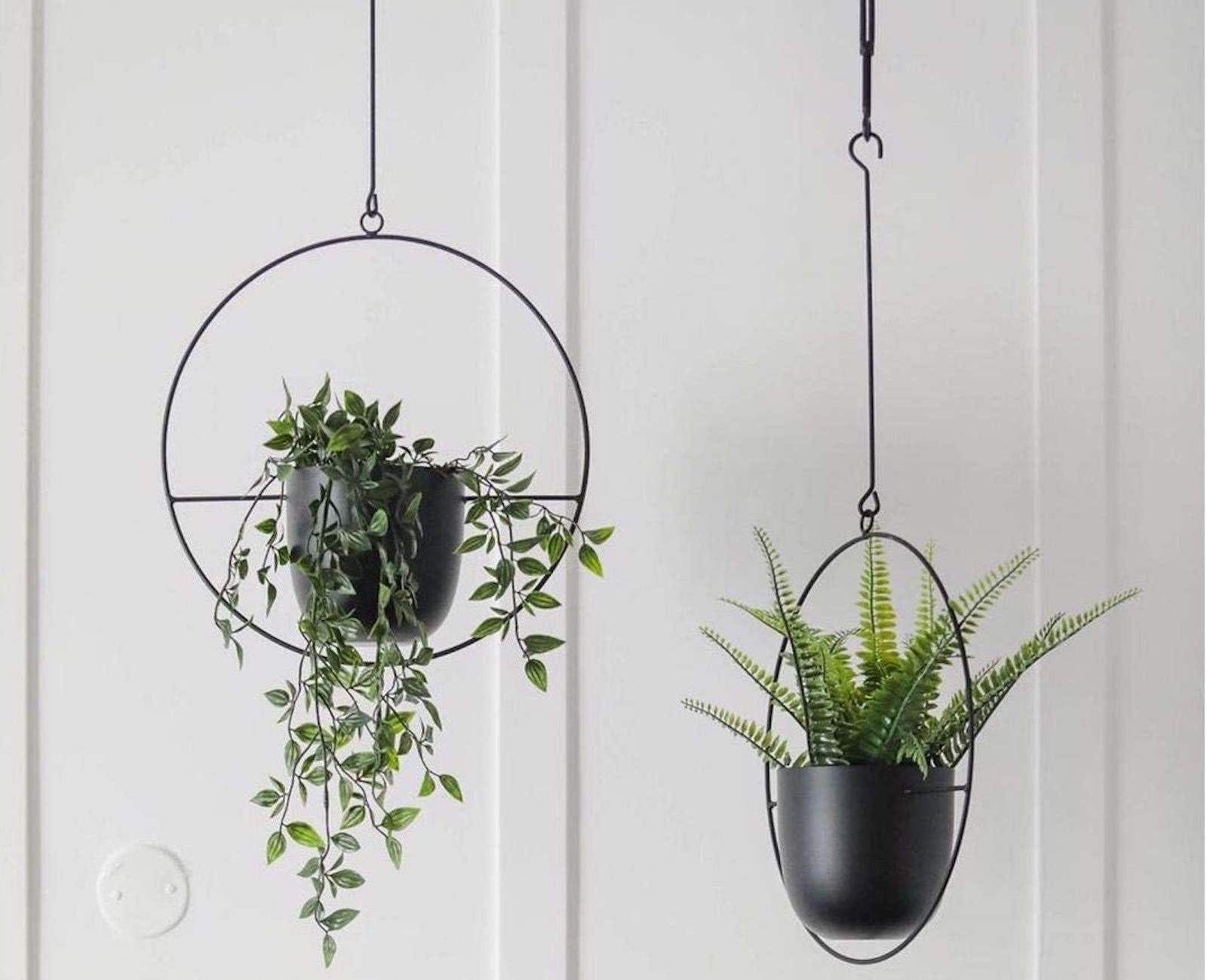 Two Abetree Planters with plants hanging from a ceiling.