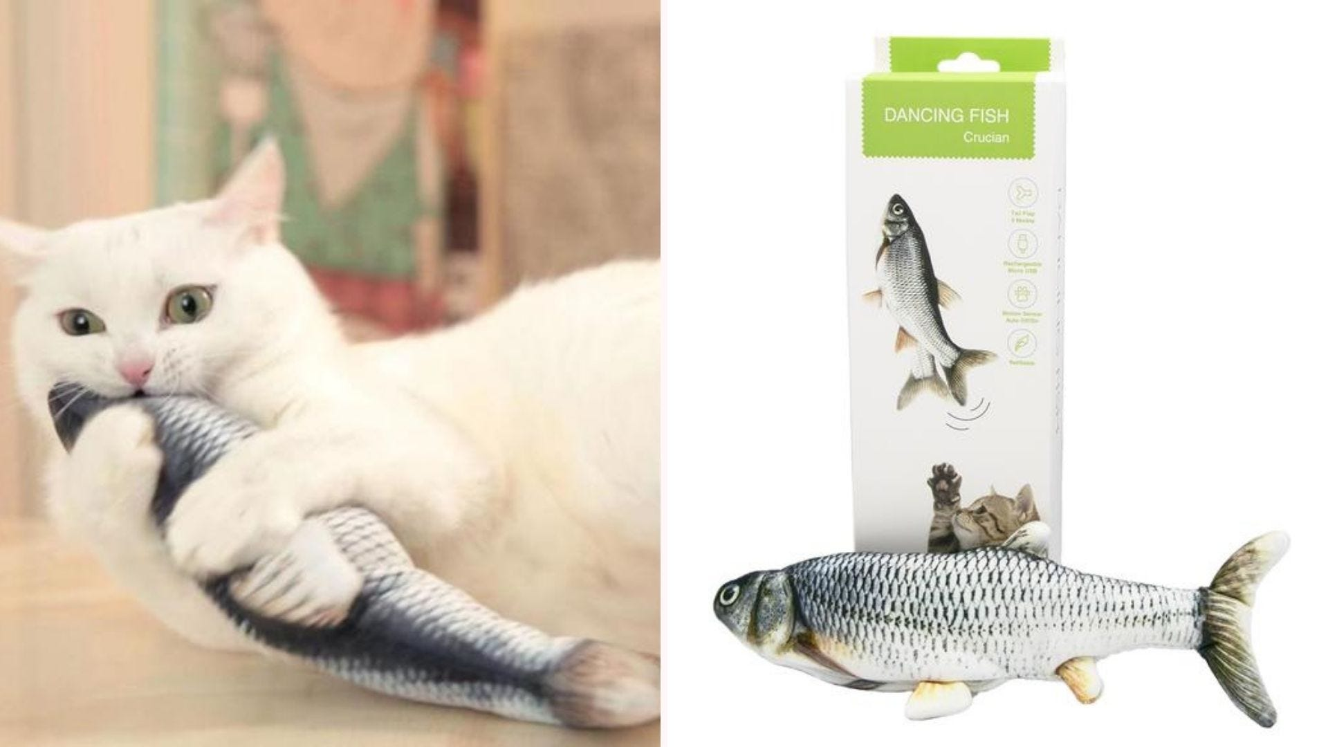 A white cat biting the dancing fish, and the toy lying in front of its box.