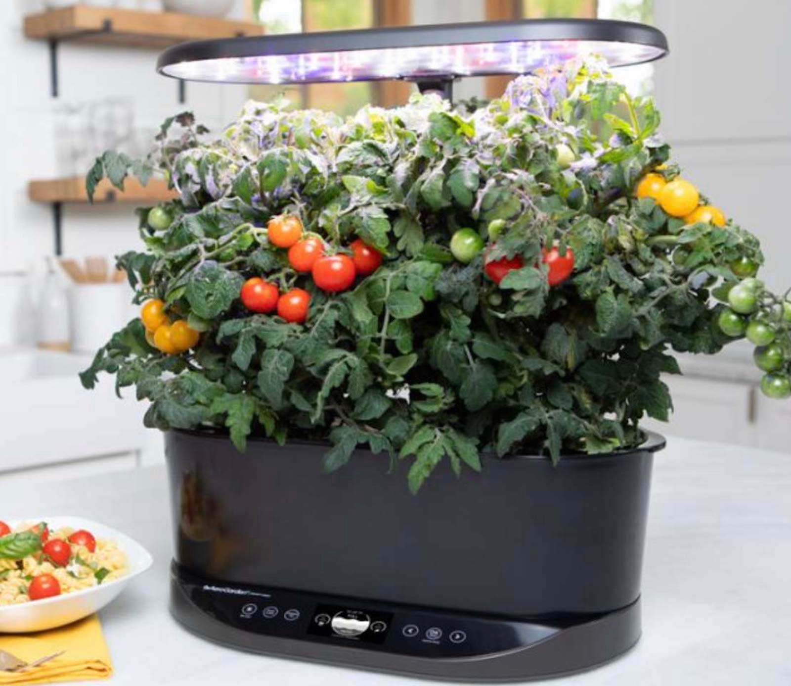 A black hydroponic garden with tomato plants on a kitchen counter