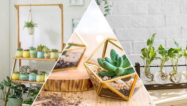 6 Stunning Terrariums and Stands to Show Off Your Plants