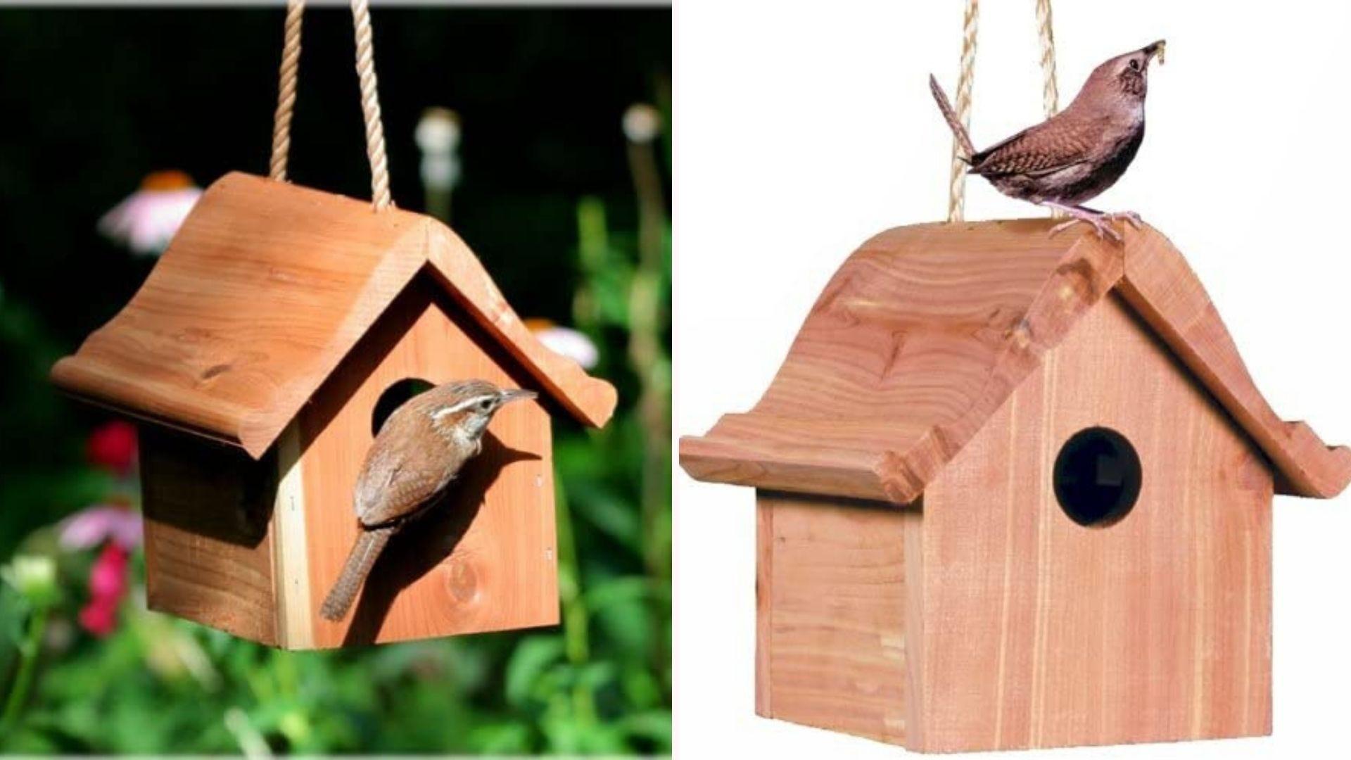 Bird checking out a cute wooden birdhouse.