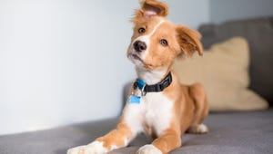 The Best Collars for Your Dogs