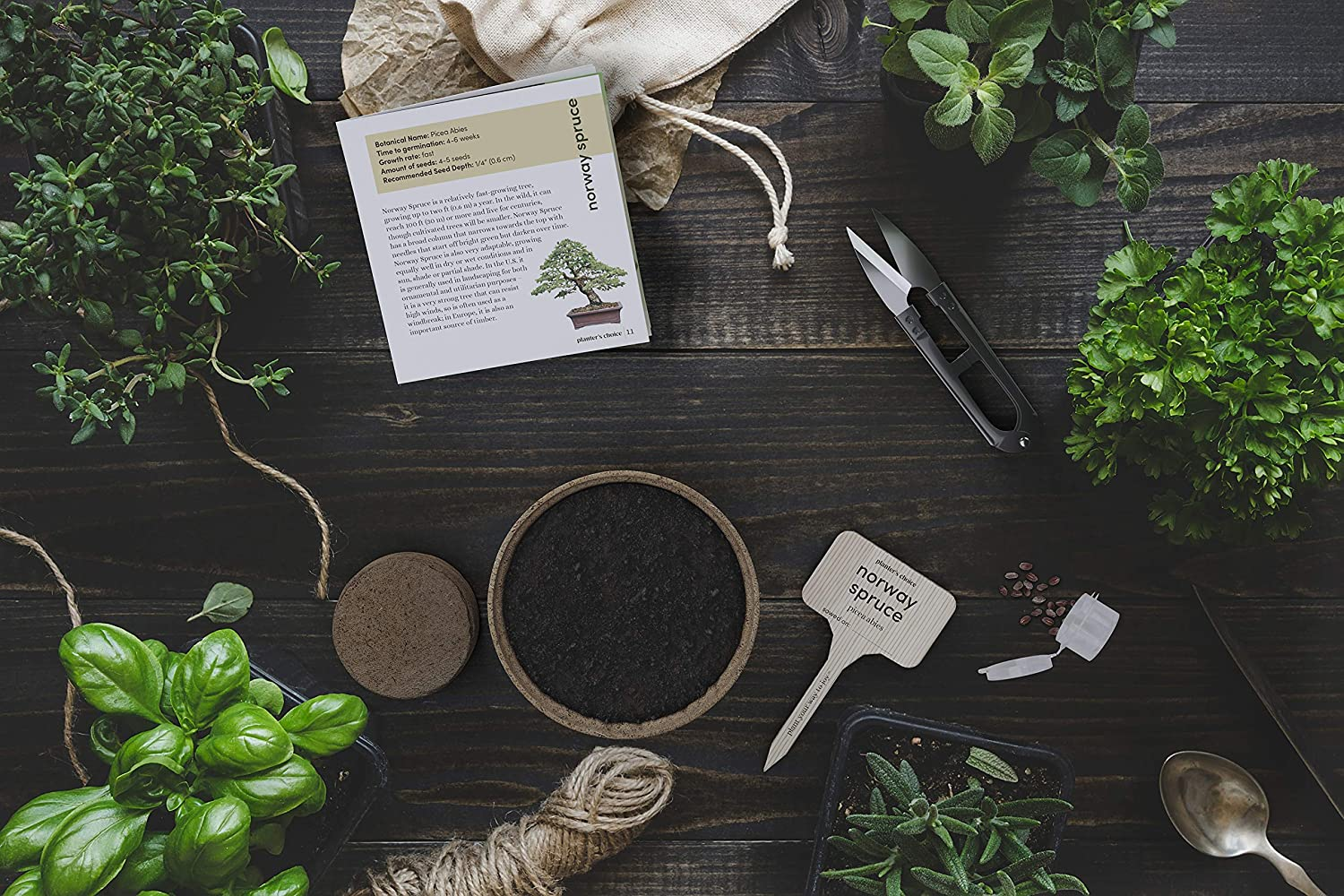 Elements of a bonsai tree kit scattered across a wood surface