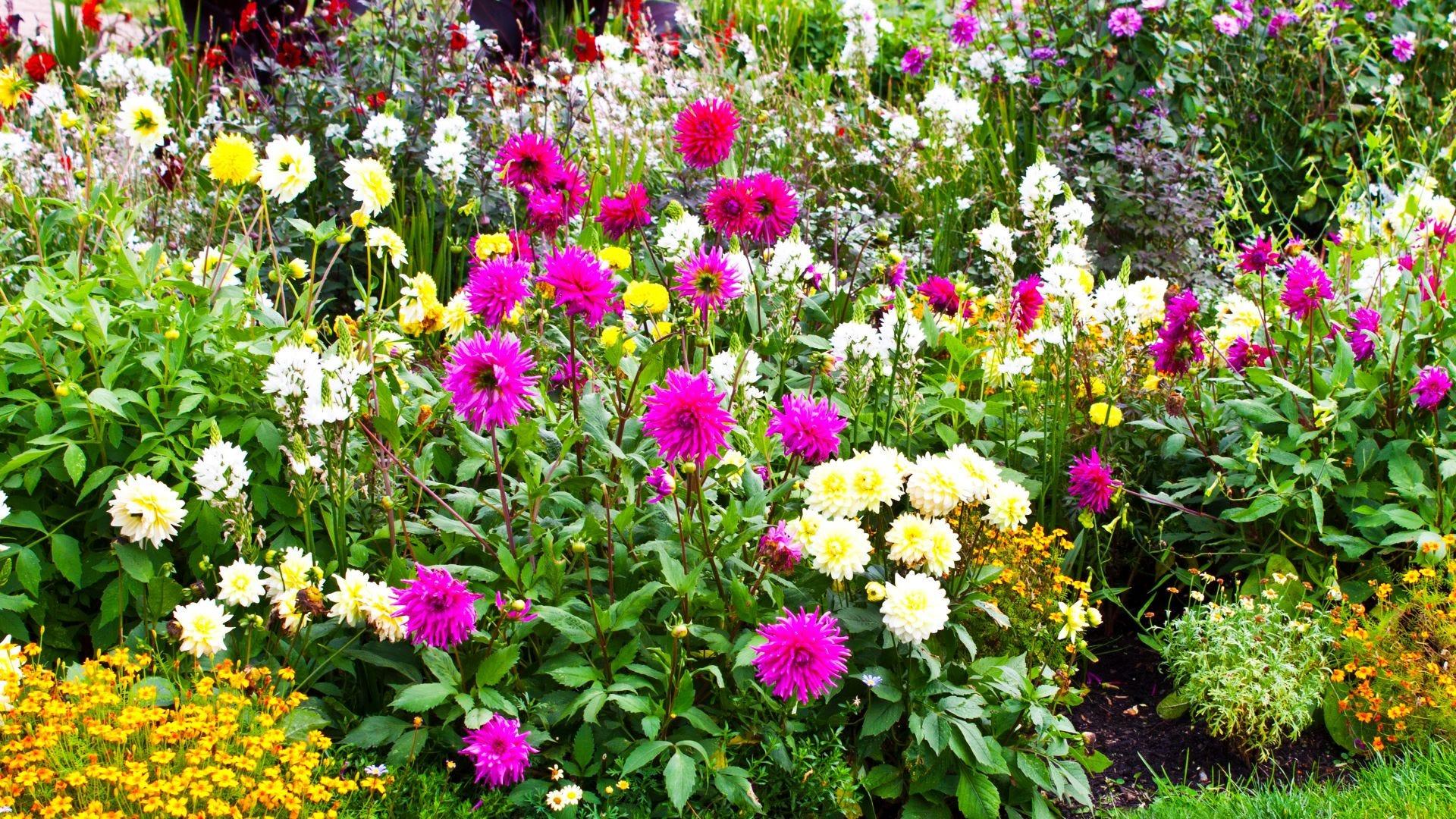 A colorful flower garden.