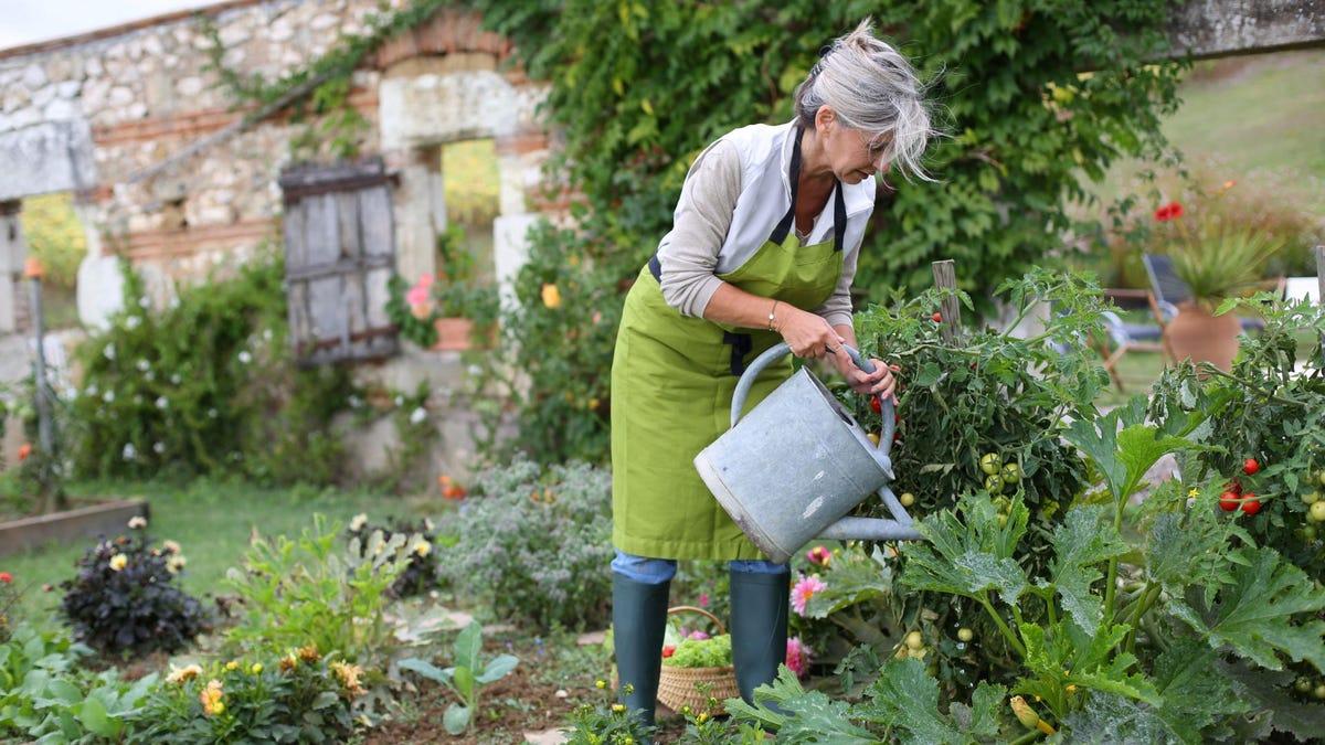 A woman watering a vegetable garden.