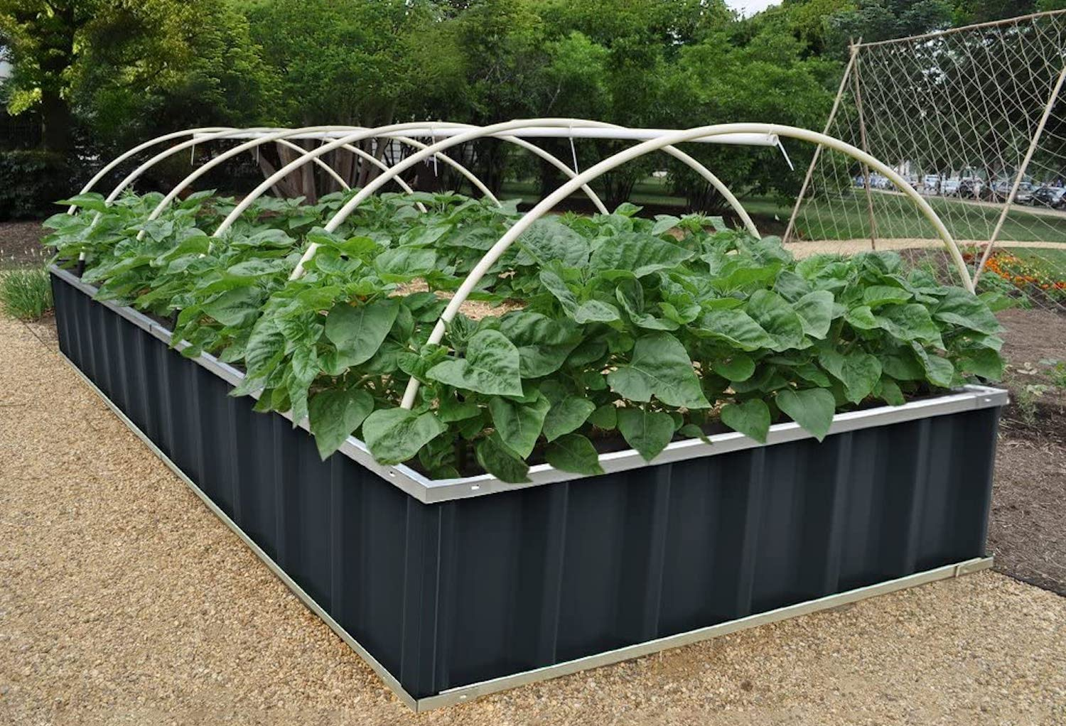 A raised garden bed made of metal with green plants in it and arched rods over it