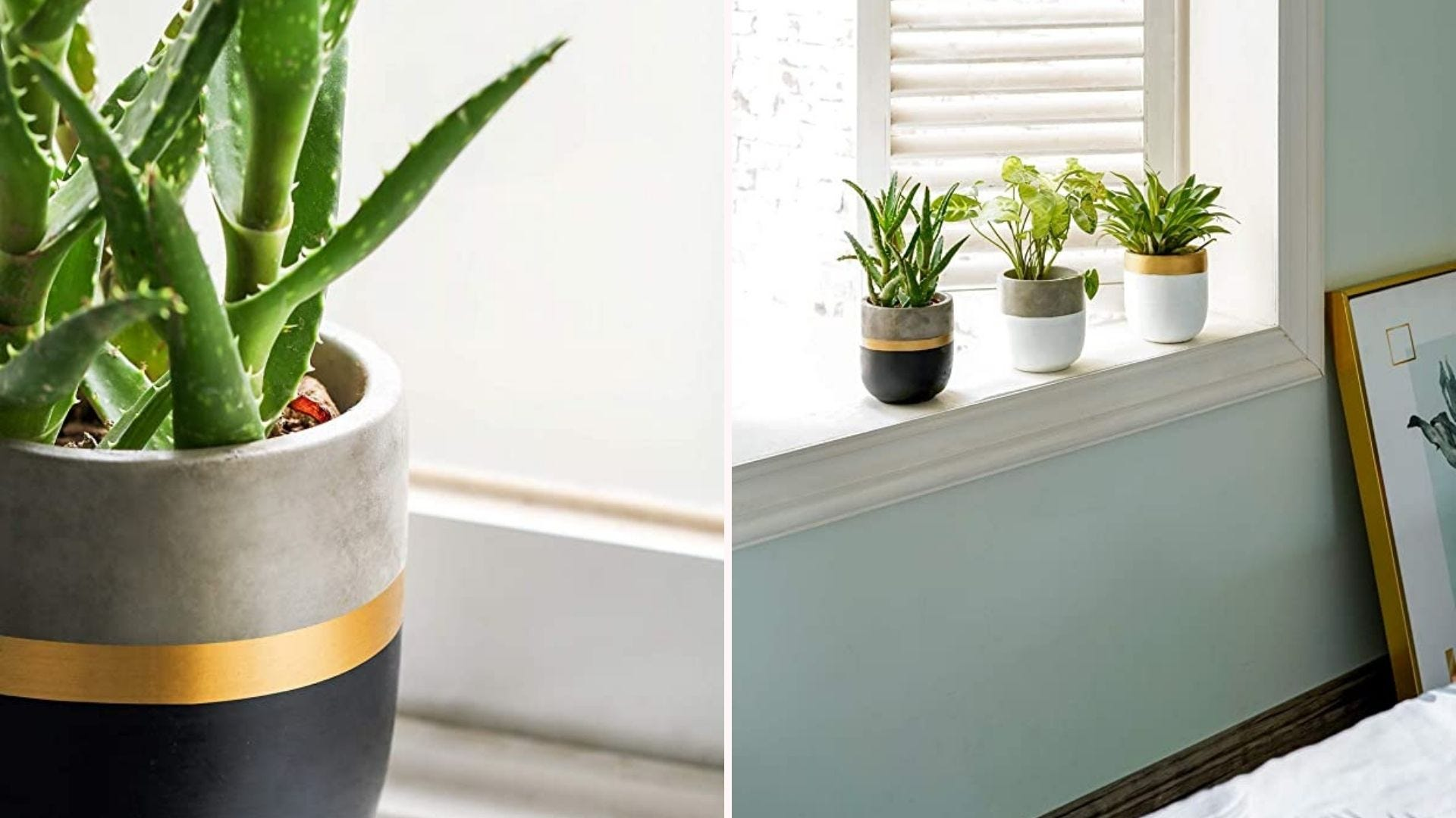 On the left, a single plant in a mini concrete planter, and on the right, a row of three mini planters on a windowsill.