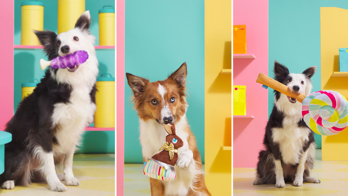 Two dogs holding BARK's stuffed candy stick, chocolate bunny, and lollipop.
