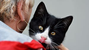 Are Cats As Loyal as Dogs?