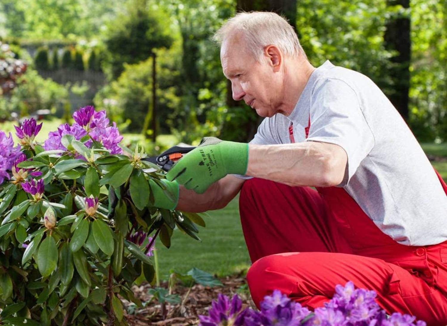 A man kneels to prune a flowering plant; he wears a pair of green gloves