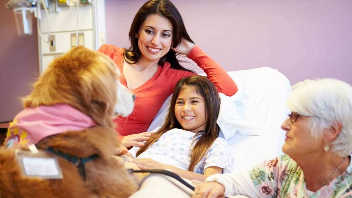 A dog visiting a little girl in the hospital.