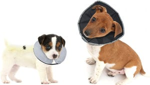 The Best Dog Cones for Post-Surgery Recovery