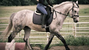 The Best Horse Saddle Pads You Can Buy