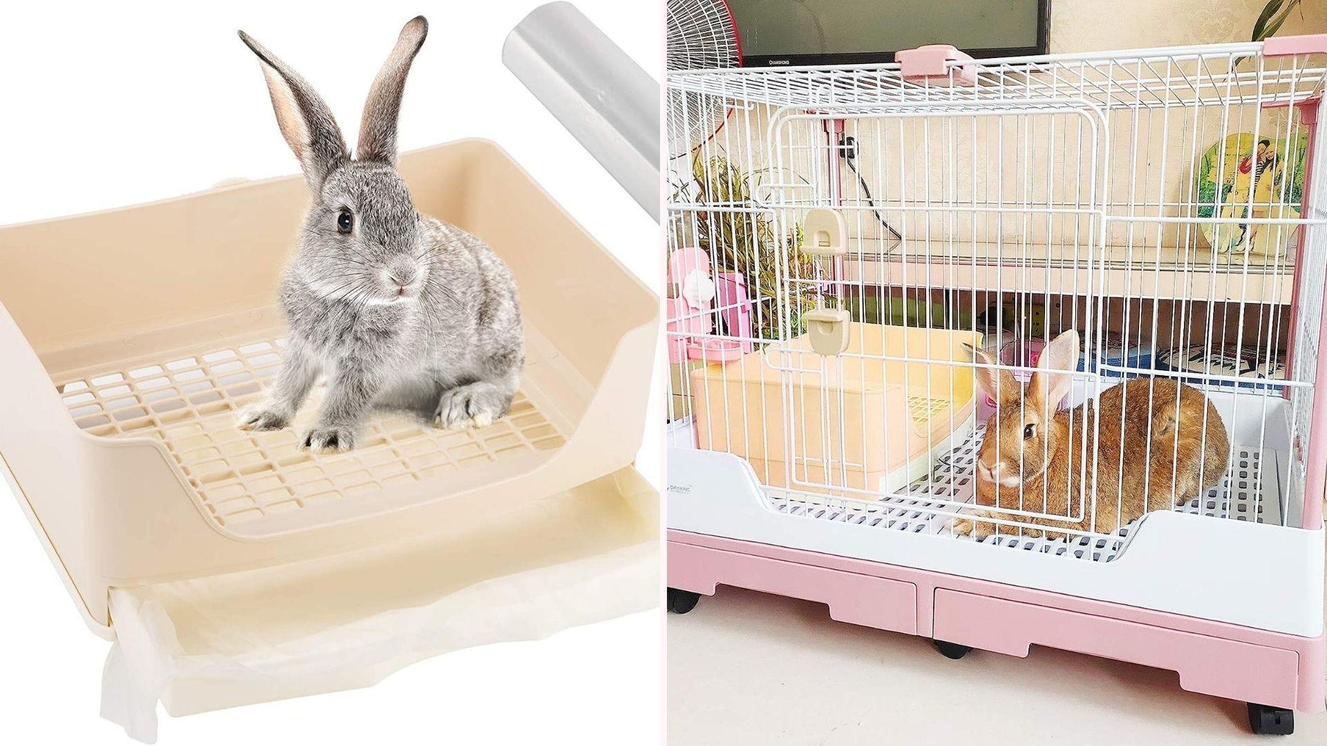 Rabbit using a bunny litter box.