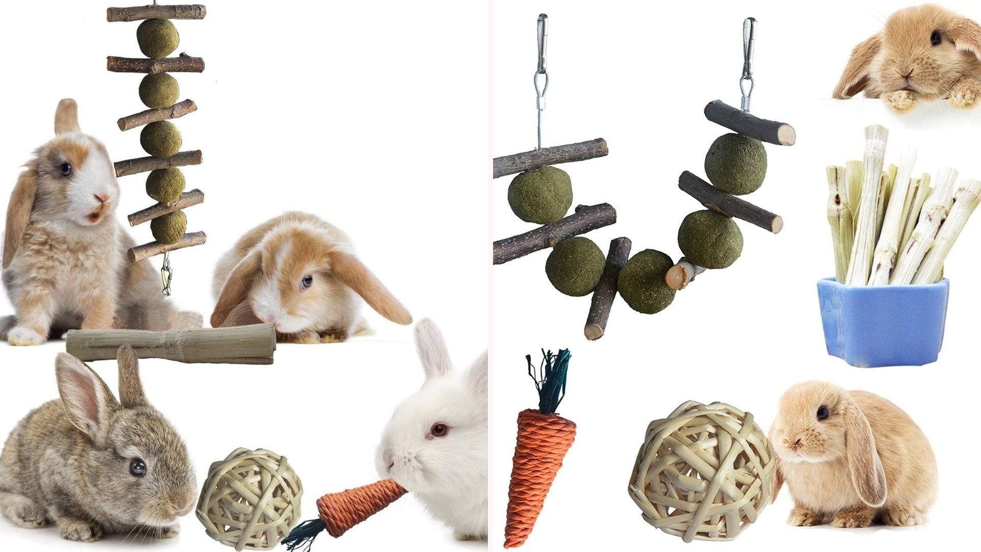 Bunnies enjoying natural bunny treats and toys.