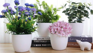 The Best Self-Watering Pots and Planters for Your Home