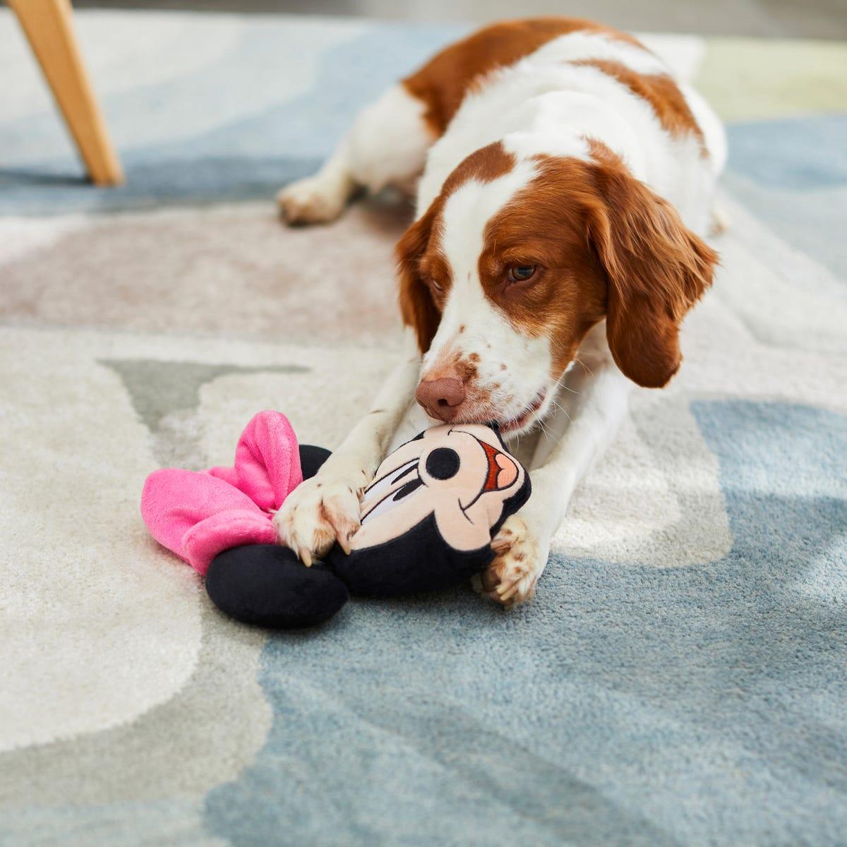 A dog chews on a plushy toy shaped like Minnie Mouse.