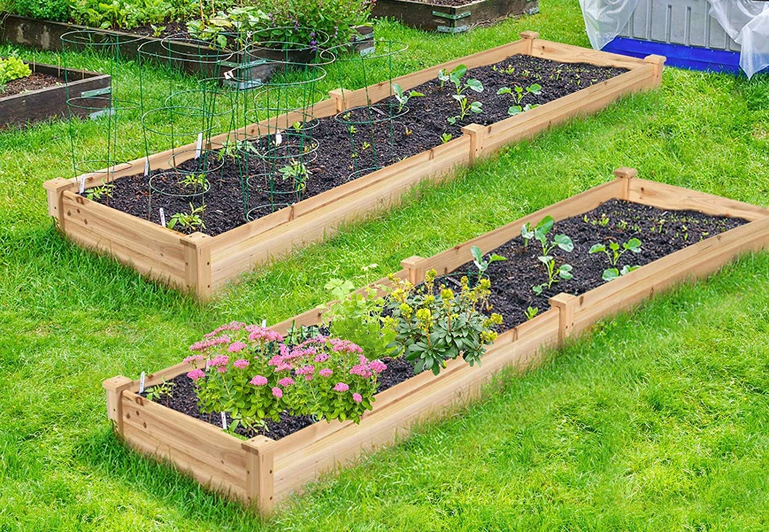 Two rectangular, wood raised garden beds, one with flowering plants, one with green veggies growing