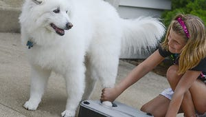 The Best Paw Cleaners for Your Dog