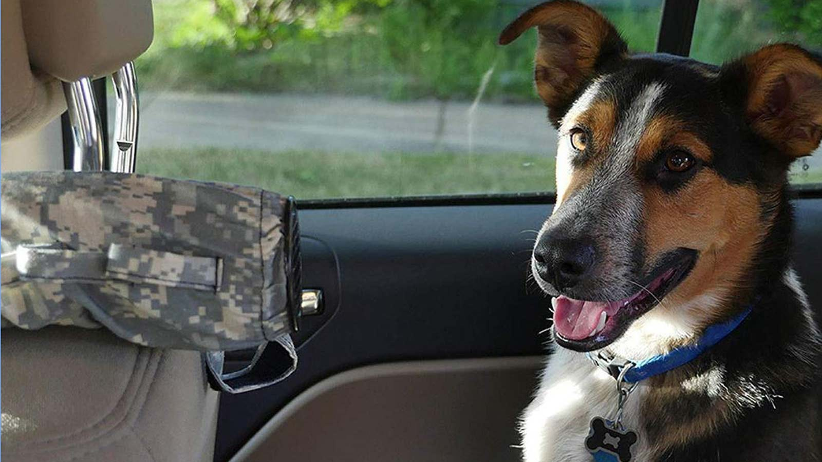 A dog sits in the back seat of a car with an AC extending tube pushing cool hair towards him.