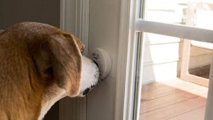 The Best Dog Training Bells for Your Pooch