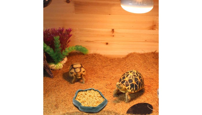 turtles enjoying some food from their plastic feeding dish.