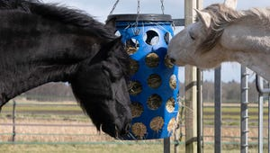 The Best Feeders for Your Horse