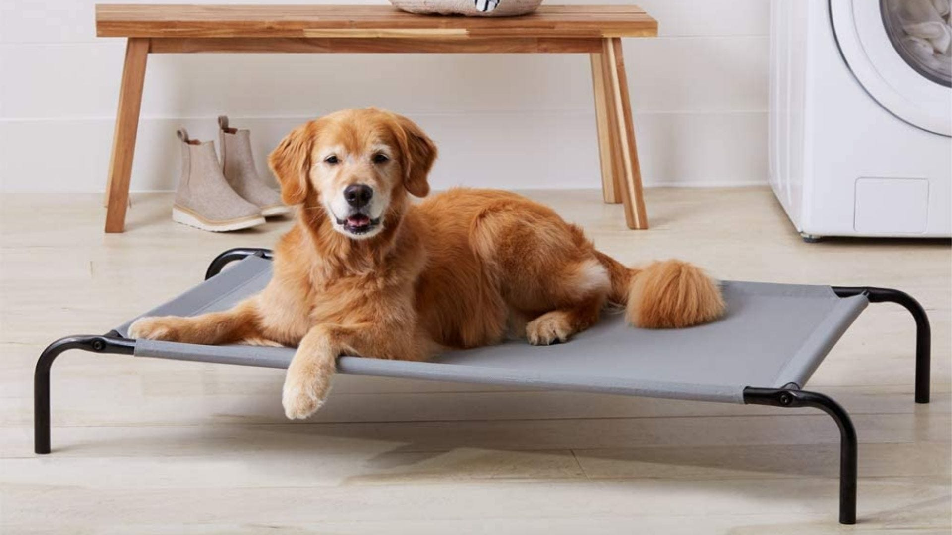 A dog sits on an elevated dog bed.