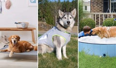 9 Ways to Keep Your Pup Cool During the Dog Days of Summer