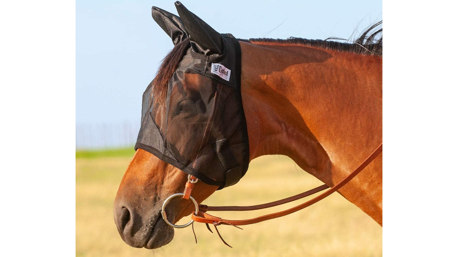 Light brown horse wearing a black mesh fly mask that reaches halfway down its muzzle.