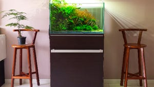 The Best Stands for Your Aquarium