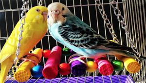 The Best Bird Swings for Your Pet