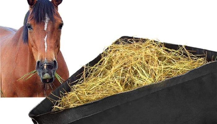 On the left, a brown horse with a black mane looks forward. On the right, a black corner horse feeder holds hay.