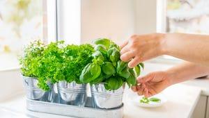 Indoor Herb Garden Kits for Your Kitchen