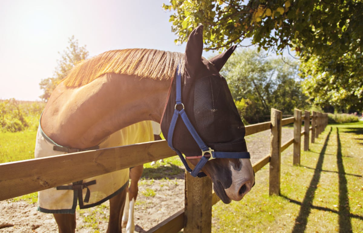 a horse wearing a netted fly mask and putting its head over a fence