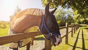 Choosing the Best Horse Fly Mask