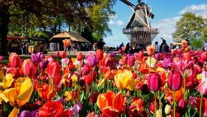 Take a Virtual Tour of the Famous Keukenhof Tulips