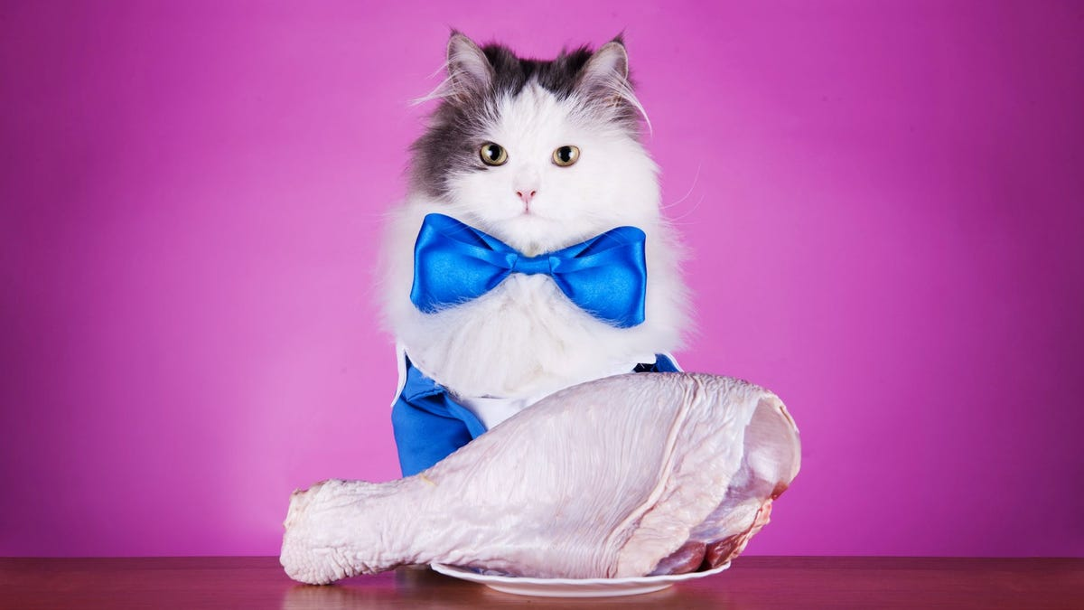 A cat in a bow tie sitting behind a plate full of meat.