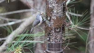 The Best Birdseed for Your Outdoor Feeder