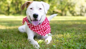 The Best Bandanas for Your Dog