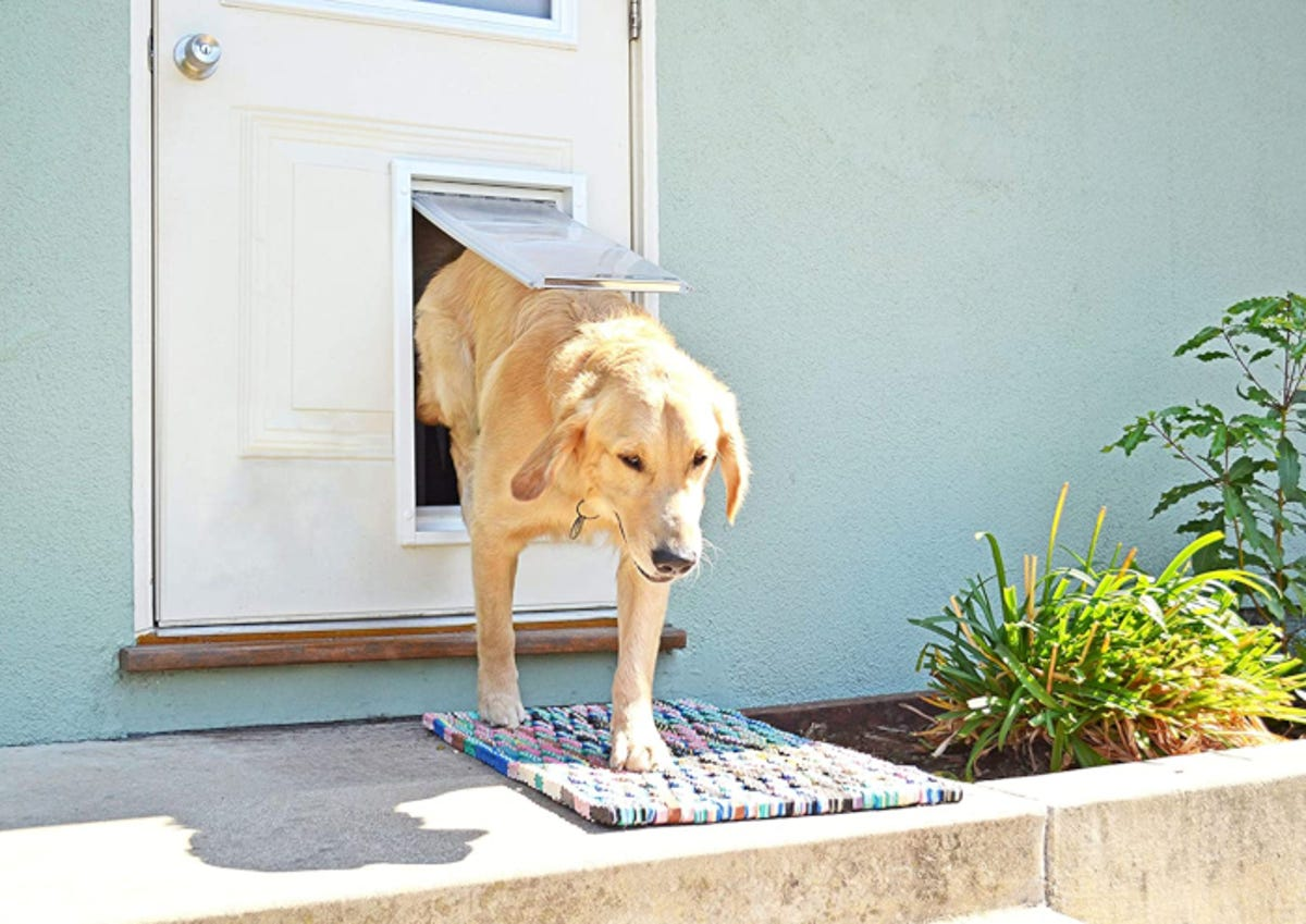 Dog exiting a home through a dog door