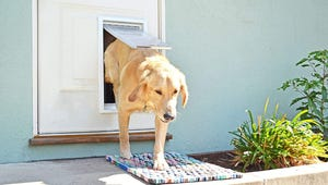 The Best Dog Doors for Your Home