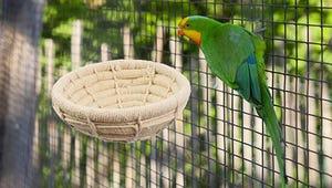 Choosing the Best Bird Nest