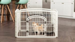 The Best Pet Playpens for Small and Large Animals