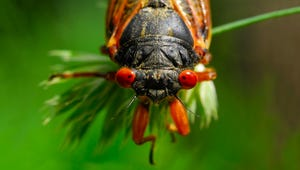 Here's When Those Pesky Cicadas Should Be Gone