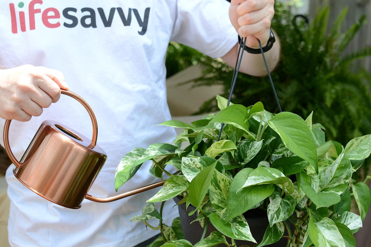 A man watering a hanging plant using a copper watering can.